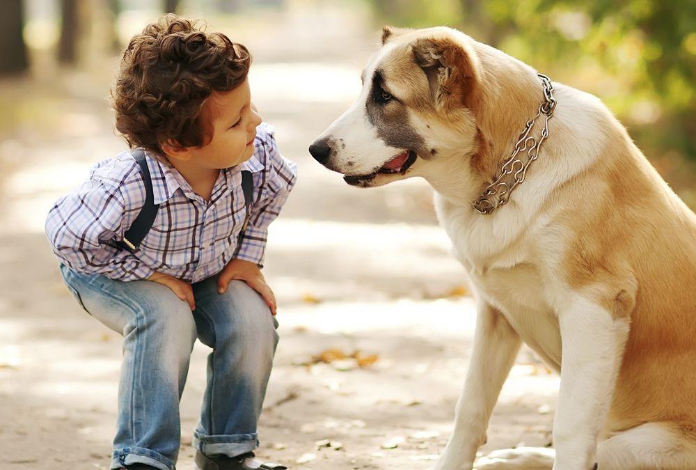 La química entre animales y humanos