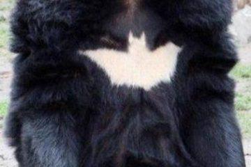Oso-batman