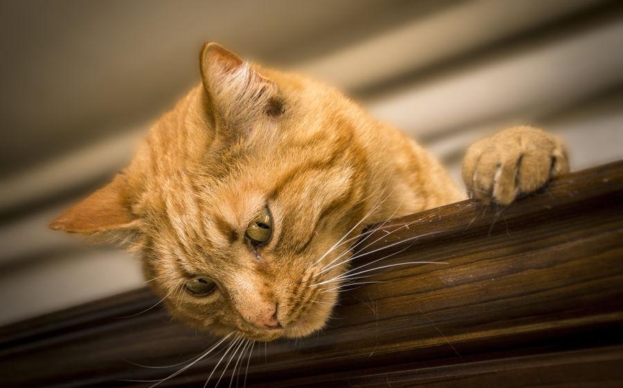 beneficios de jugar para los gatos