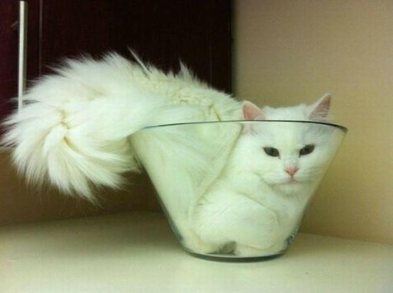 gato en bol