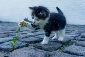 la importancia de jugar para los gatos